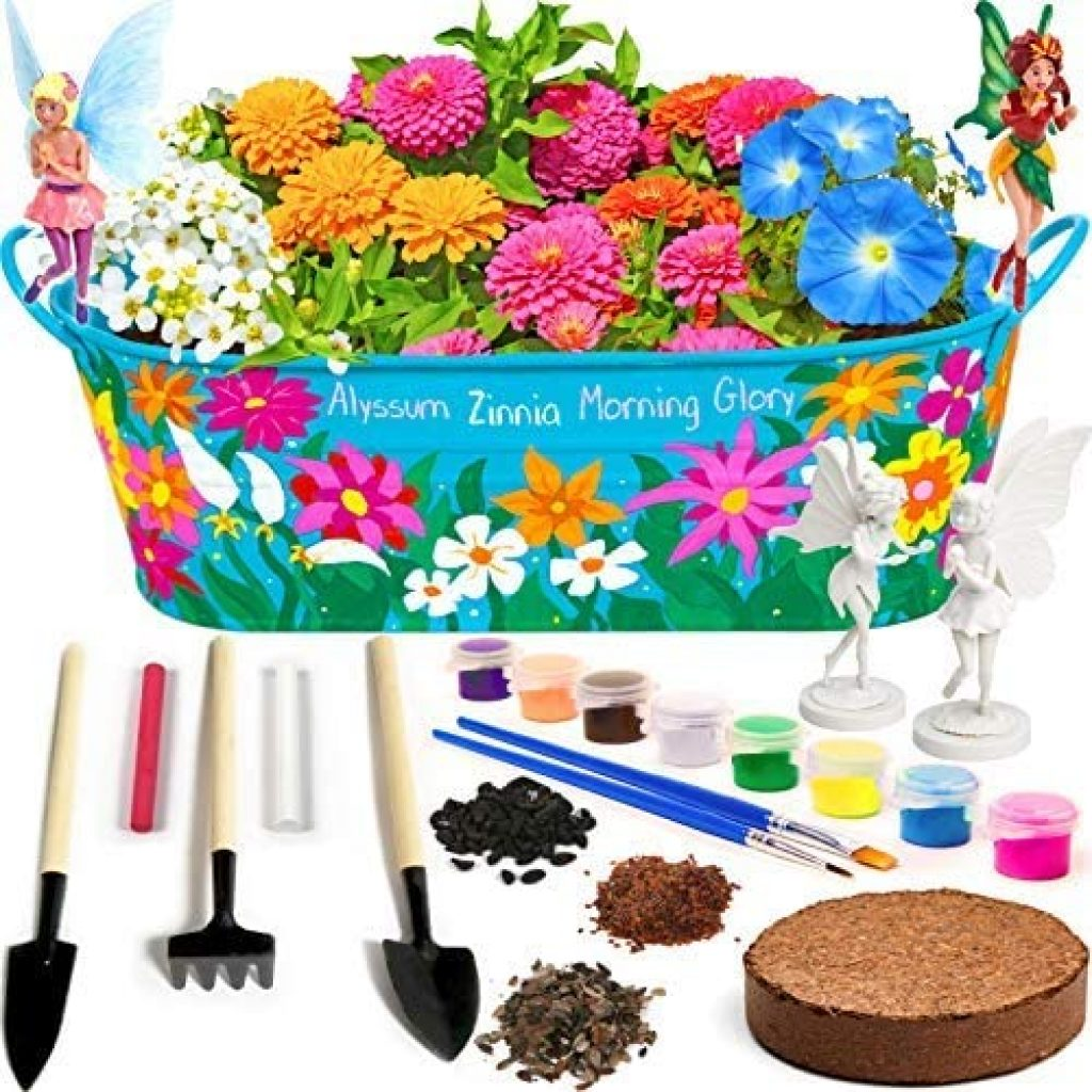 Little Planters Paint & Grow Fairy Garden with Real Flowers and Magical Fairies - Paint, Plant and Grow Morning Glory, Zinnia and Alyssum Flowers