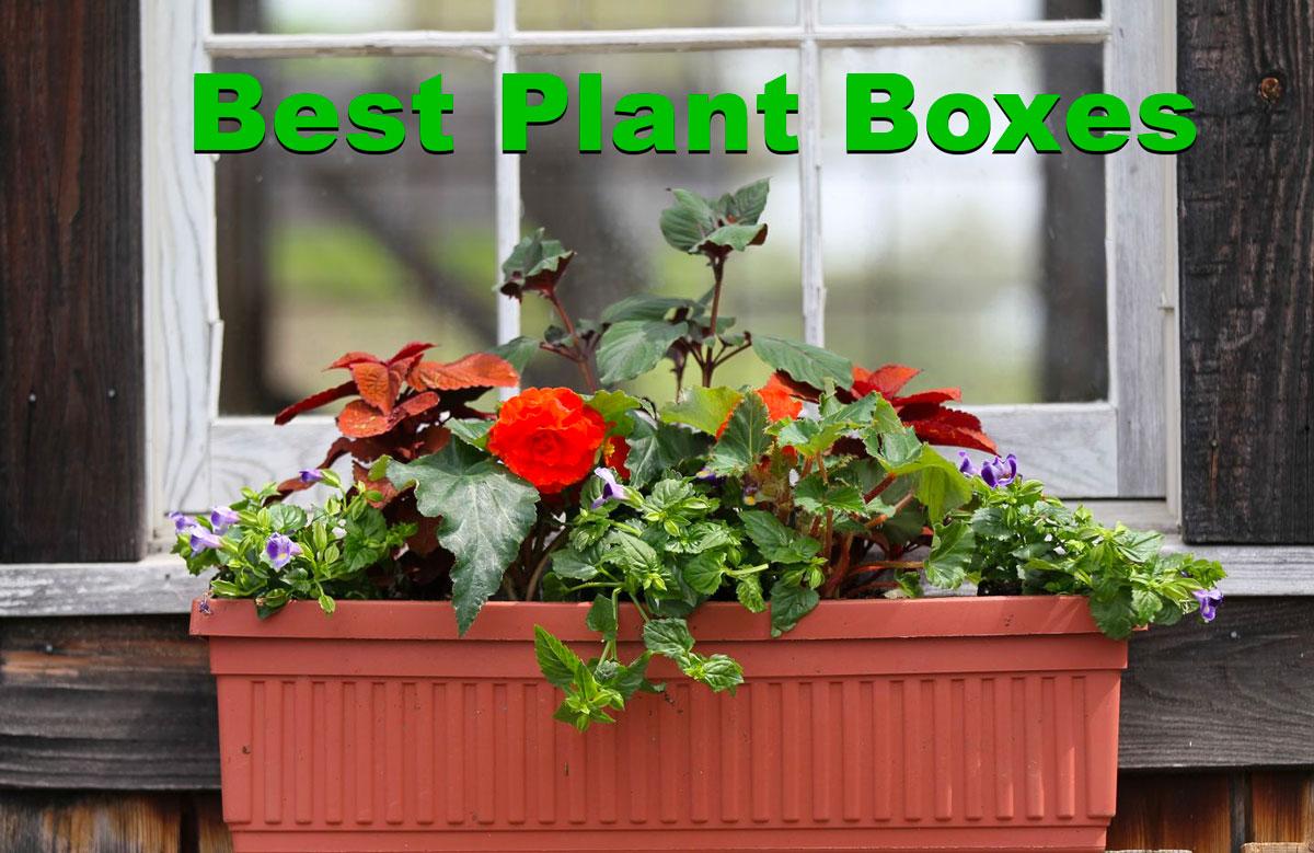 best plant boxes