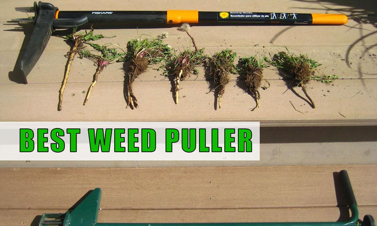 Best Weed Puller