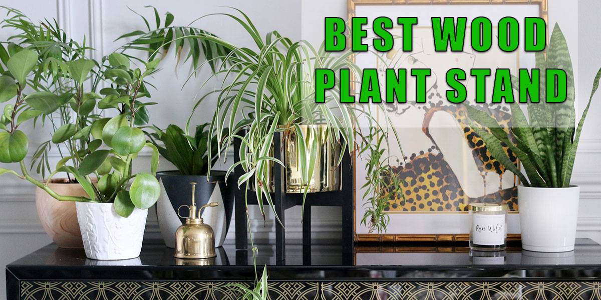Best Wood Plant Stand